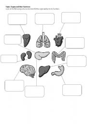 English Worksheet: Body Organs
