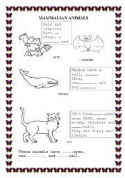 English worksheet: Mammalian Animals
