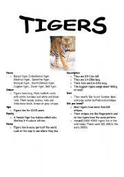 English Worksheets: Tiger Fact File