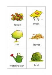 English Worksheet: Plant and Garden Flashcards