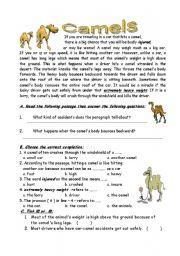 English Worksheets:  camels