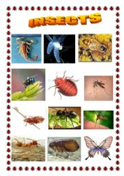 English worksheet: Insects