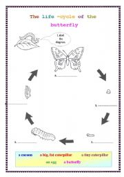 English Worksheet: The life cycle of the butterfly