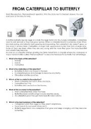 English Worksheets: From caterpillar to buterfly