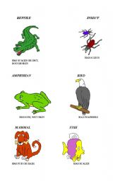 English Worksheets: animal classes characteristics