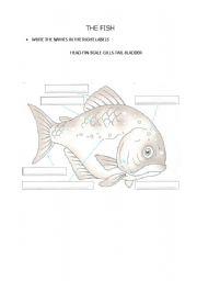 English Worksheets: The fish