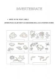 English Worksheets: INVERTEBRATE