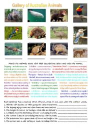 English Worksheets: Gallery of Australian Animals