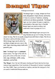 English Worksheets: The Bengal Tiger