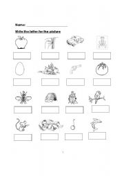 English worksheets: Write the beginning letter of the picture