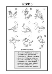 English Worksheet: ANIMALS (BIRDS)