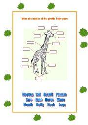 English Worksheets: Giraffe Body