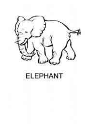 English Worksheets: my jungle book