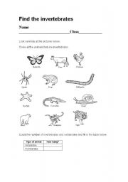 English Worksheets: vertebrates-invertebrates