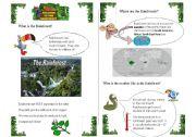 English Worksheet: The Rainforest