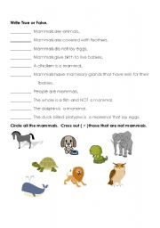 English Worksheets: mammala