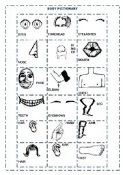 English Worksheets: BODY PARTS PICTIONARY