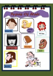 English Worksheets: Types of Hair