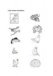 English Worksheets: Animals with feathers