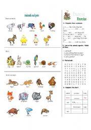 English Worksheet: animals and pets