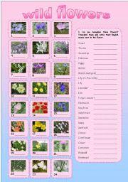 English Worksheet: WILD FLOWERS