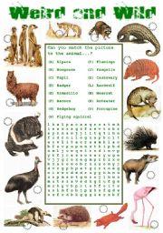 English Worksheets: Animals - Weird and Wild