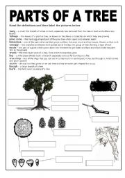 a black and white worksheet about the parts of a tree