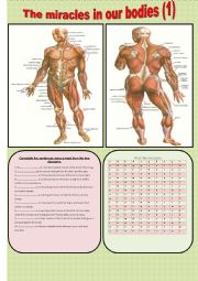 English Worksheets: The miracles in the human bodies (1)