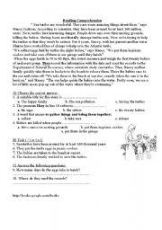 English Worksheets: Sea turtles