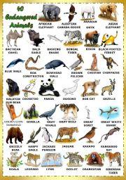 English Worksheets: Find 40 Endangered Animals