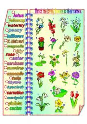 English Worksheet: Lovely Flowers - matching activity **fully editable
