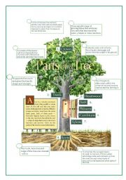 English Worksheet: PARTS OF THE TREE