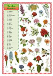 English Worksheet: Garden flowers- matching