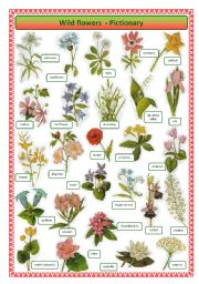 English Worksheet: Wild flowers -pictionary
