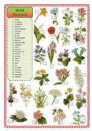 English Worksheet: Wild flowers-matching