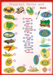 English Worksheet: Fragrant Herbs and Spices-Matching **fully editable