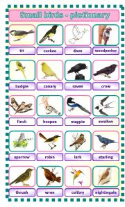 English Worksheets: Small birds - pictionary