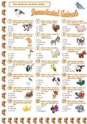 English Worksheet: Domesticated Animals-Quiz