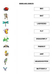 English worksheet: BIRDS AND INSECTS