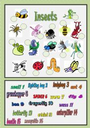 English Worksheet: Insects - matching exercise
