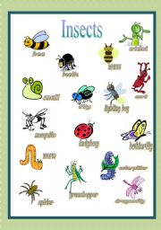 English Worksheet: Insects Pictionary