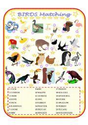 English Worksheets: Birds Matching