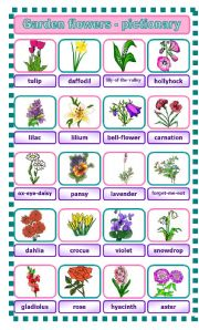 English Worksheet: Garden flowers - pictionary