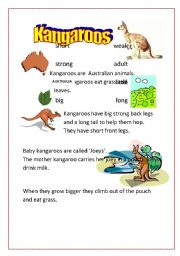 English Worksheets: Kangaroos