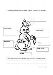 English Worksheets: Rabbit describing