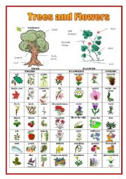 English Worksheet: Trees and Flowers