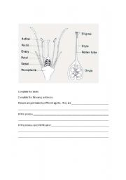 English Worksheets: Pollination fertilization