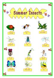 English Worksheets: SUMMER INSECTS