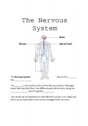English teaching worksheets: Nervous system