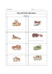 English Worksheets: Animal baby